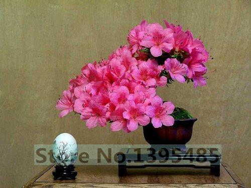 10pcslot Crape myrtle blooms seeds flower seeds potted flowers and garden plants flower seeds seasons easy kind