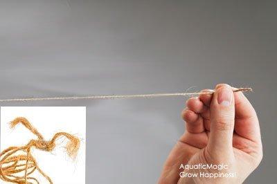Driftwood String - Live Aquarium Aquatic Plant For Fish Tank Java Fern Anubias Moss Echinodorus
