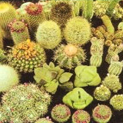 Cactus cacti variety mix 50 seeds