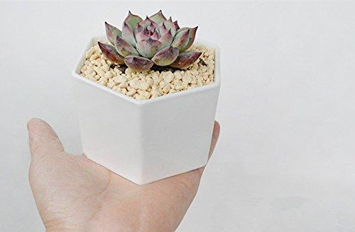 Ceramic Geometric Succulent Planter--White Porcelain Succulent Planter-Cactus Planter Pot - White Wedding Centerpiece - DIY Design