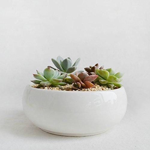 Round Bowl Shape Ceramic Succulent Planter - White Ceramic Succulent Planter-White Porcelain Cactus Pot