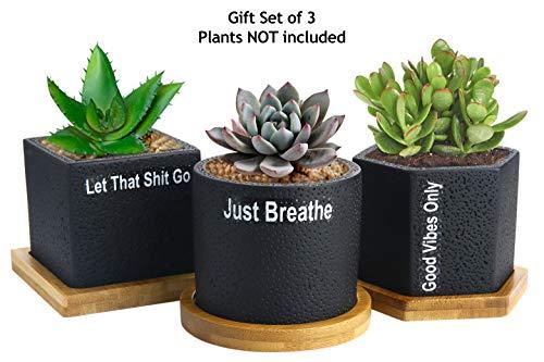 Succulent Pots Planter Cactus Pot - 275 inch Succulent Planters Black Concrete for Succulents Herbs Mini Flowers Plants Drainage Bamboo Tray Set of 3