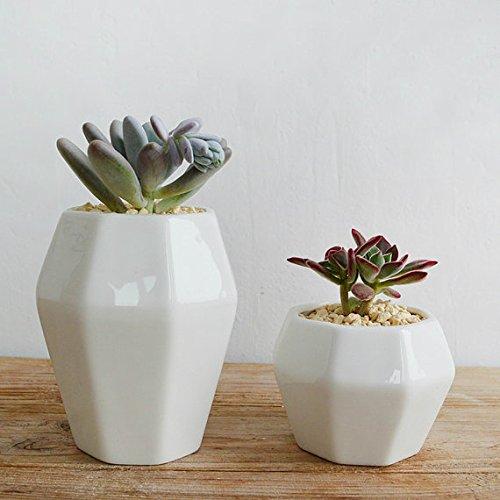 Hexagon Modern Minimalist White Ceramic Succulent Pot Perfect planterflower pot for succulent cacti flowers live or artificial plants for home or office PLA0047-11
