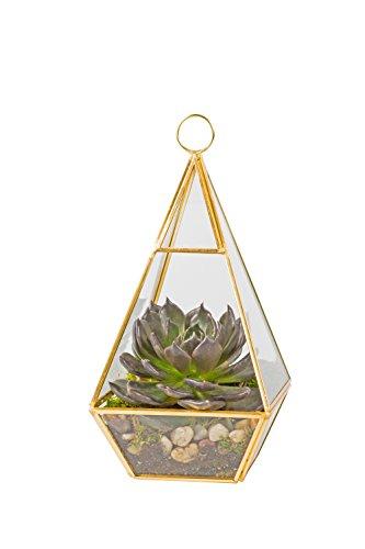 Glass Pyramid Terrarium Succulent Haning Air Plant Greenhouse