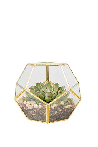Sphere Glass Terrarium Succulent Air Plant Greenhouse