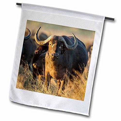 Danita Delimont - Buffalo - Botswana Moremi Game Reserve Cape Buffalo standing in tall grass - 18 x 27 inch Garden Flag fl_224918_2