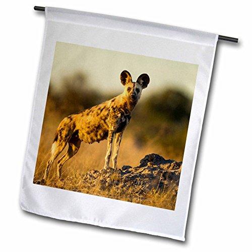 Danita Delimont - Dog - Botswana Moremi Game Reserve Wild Dog standing in tall grass - 18 x 27 inch Garden Flag fl_224931_2