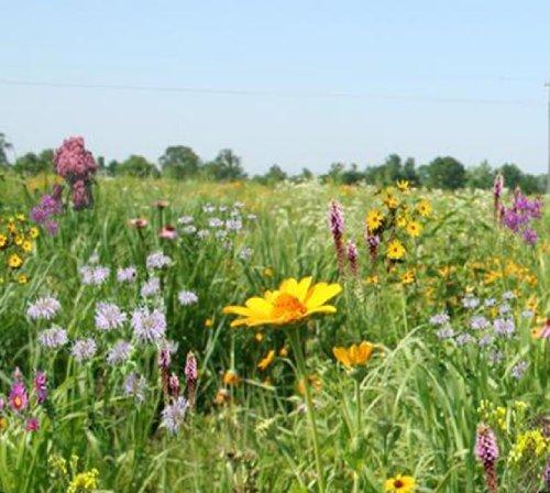 Tall Grass Meadow Mix Mix 102 1 PLS Pound True Native Seed Northeastern US