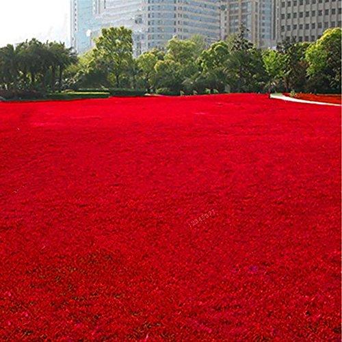 hudiemm0B Grass Seeds 500Pcs Grass Seeds Lawn Perennial Garden Soccer Court Field Villa Outdoor Plant Red Grass Seeds