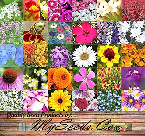 PERENNIAL Wildflower SEEDS - BULK MIX - Minimum 30 VARIETIES - 100 seed NO FILLERS - By MySeedsCo 004 oz - 1500 sq ft
