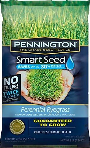 Pennington Smart Seed Perennial Ryegrass Blend 3 lb