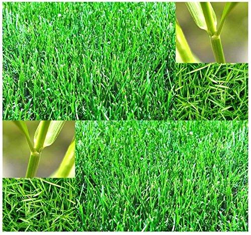 Bermuda Grass Seed - Lawn Grass Seeds - HARDY ZONES 7 - 10