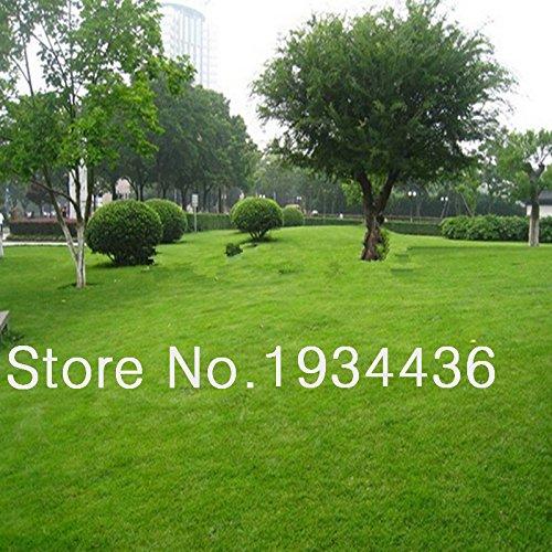 200seedspack special grass seeds  Lawn Grass Seeds evergreen perennial