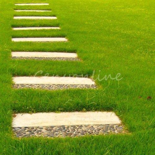 10000pcs Tall Fescue Grass Seeds Festuca Arundinacea Lawn Field Turf Ornament