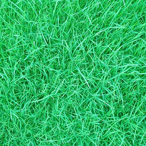 10000pcs Tall Fescue Grass Seeds Garden Ideal Lawn  10000 Tall Fescue Grass Seeds Garden Ideal Lawn   Tall fescue grass whose scientific name is Festuca arundinaceais a cool-season perennia