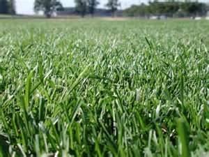 Cache Valley Premium Grass Seed Blend - 10 Pound - Wizard Seed LLC