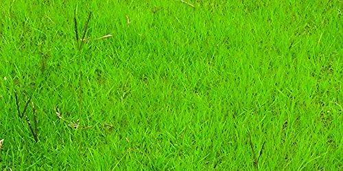 Natures Seed TURF-PANO-2000-F Bahia Grass Seed Blend 2000 sq ft