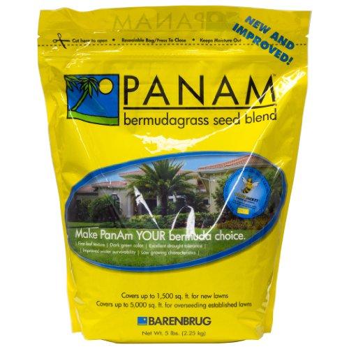 Panama PanAm Bermuda Grass Seed Blend Barenbrug USA Warm Season Grass Seed