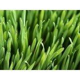 Premium Turf Kentucky Blue Grass Seed Blend - 14 pound - Wizard Seed LLC