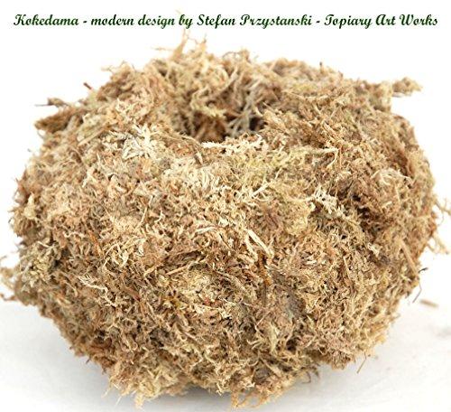 4 Kokedama Moss Planter - No Wire Inside
