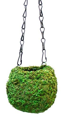Supermoss 29346 Kokedama Planter 4 Fresh Green