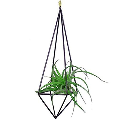 Mmei Black Geometric Rustic Style Freestanding Metal Hanging Rack Holder for tillandsia airplant air plant oahu hawaii bromeliad