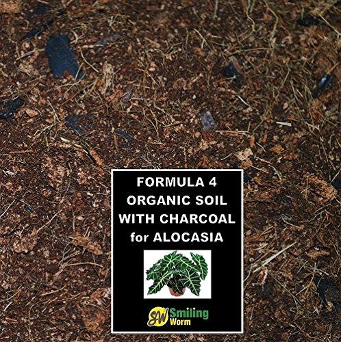 Alocasia Elephants Ear Plant Aglaonema Aloe Vera Ananas Pineapple Organic Potting Mix  Charcoal Blended