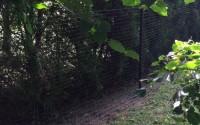 Critterfence-1100-Deer-Fence-Garden-Fencing-Dog-Fence-8ft-X-100ft-Roll-30.jpg